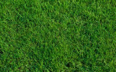 What Sod Variety is Best for Your Yard?