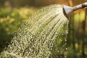 old fashioned irrigation