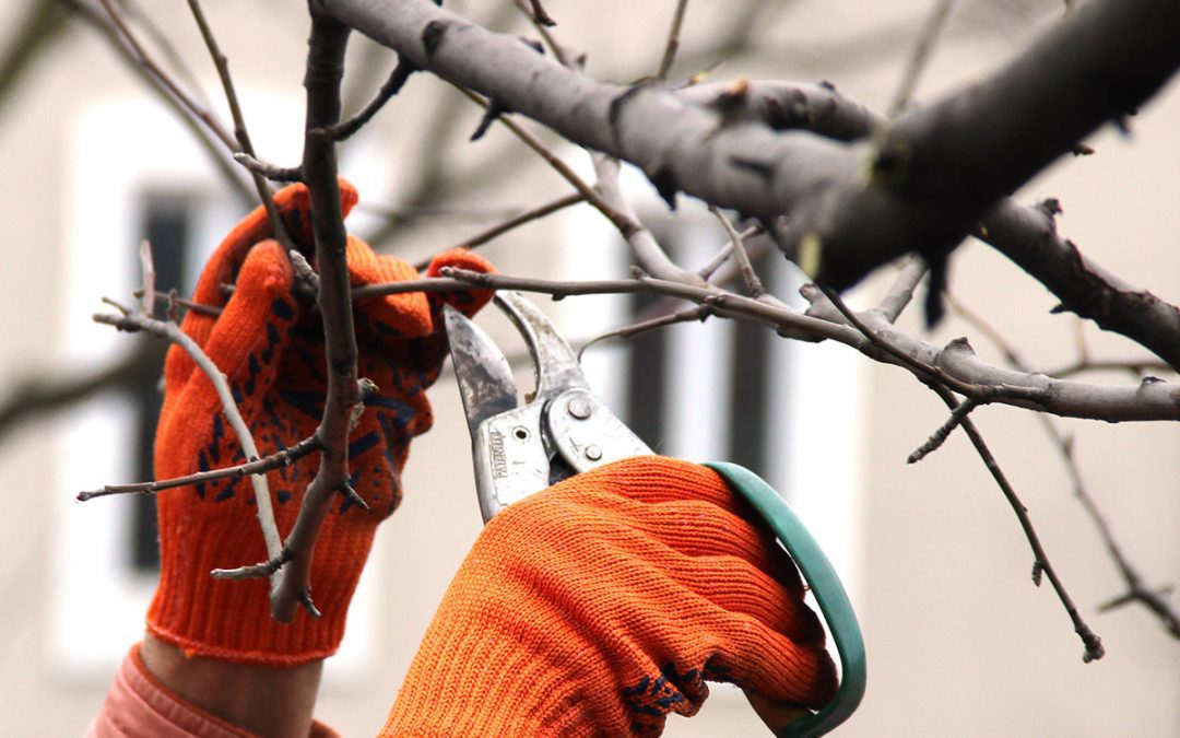 Tips for Getting Your Garden and Lawn Ready for Winter