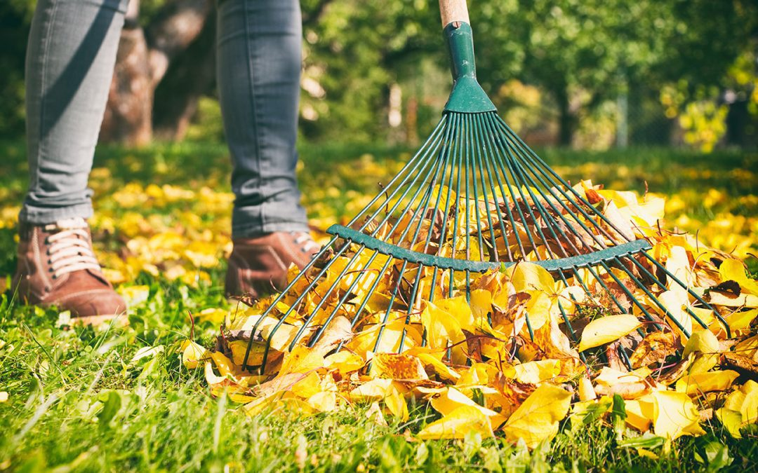 Tips For Getting Your Garden And Yard Ready For Fall